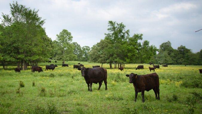 grassfed-ranch_wide-7c77268002288d70580dce3ec4ba5de1dcbf23c7-s40-c85